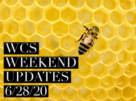 WCS Weekend Updates 6/28/20